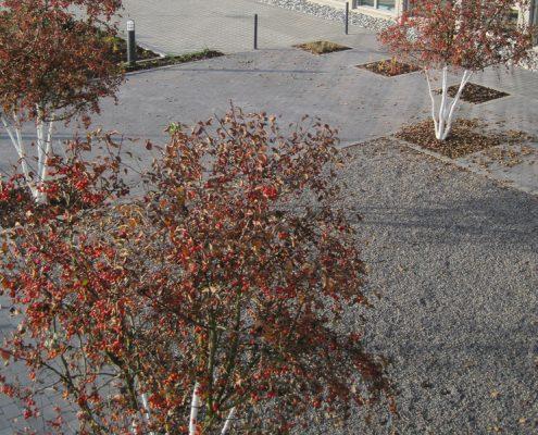 Garten Montabaur Zieräpfel