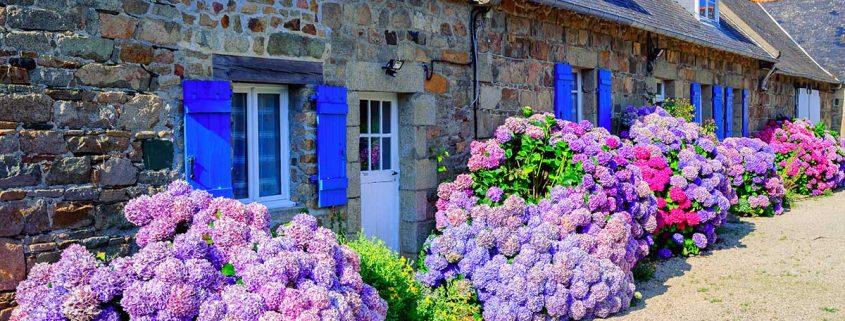 Farbenmeer Hortensien im Garten