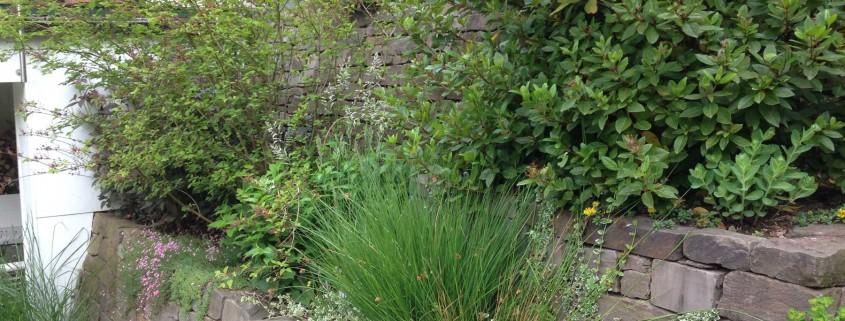 Trockenmauer mit Bepflanzung