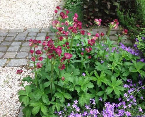 Rubra und Glockenblumen