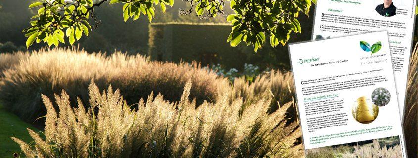 Infoblatt Ziergräser im Garten
