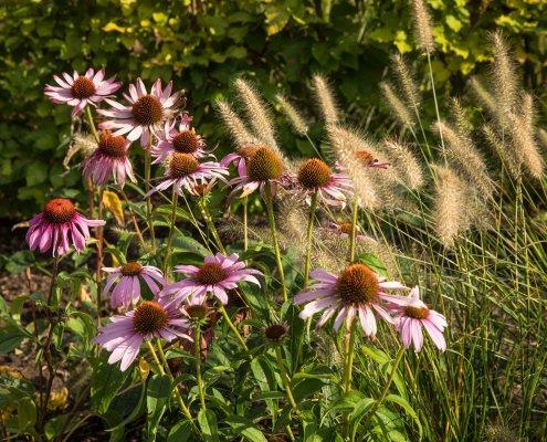 Vorgarten: Bepflanzung im Sommer