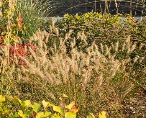 Pflanzen im Vorgarten in Solingen