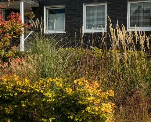 Gestaltung eines Vorgartens: Pflasterarbeiten und Bepflanzung