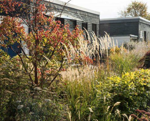 Vorgarten Gestaltung mit Pflanzen