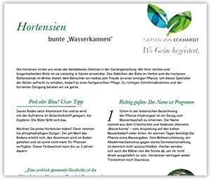 Hortensien im Garten: Tipps und Tricks