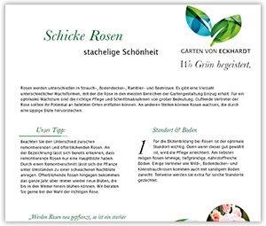 Schicke Rosen - Pflege von Gartenrosen